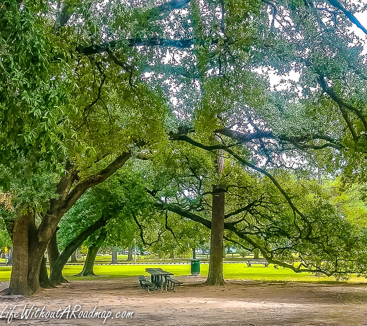 Old oak trees and picnic table in Memorial Park, Houston, Texas