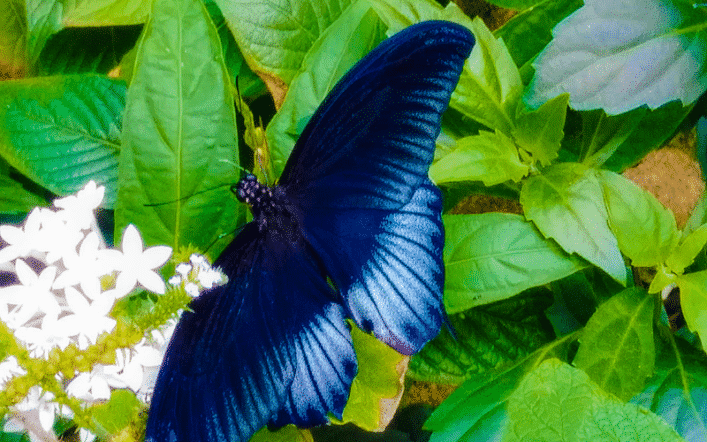 Houston's Cockrell Butterfly Center