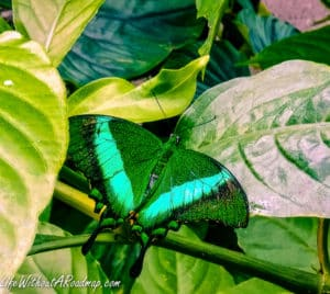 Green butterfly sitting on branch