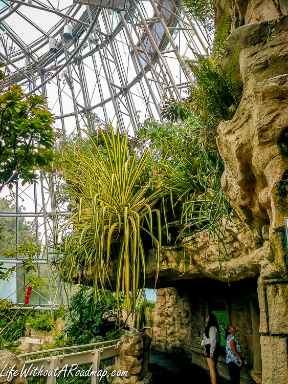 Inside atrium with rocks, plants, and butterflies