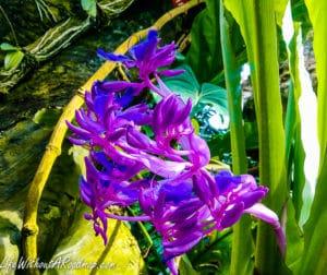 Exotic purple flower