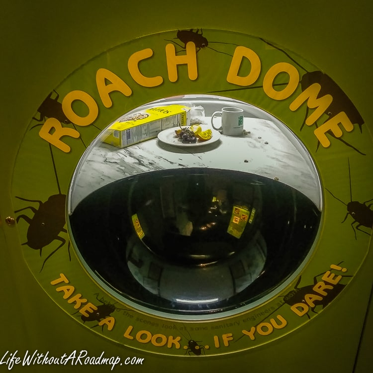 Roach Dome interactive display