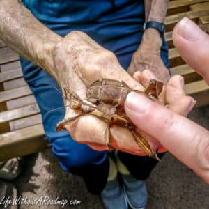 Person touching exotic insect on mans hand
