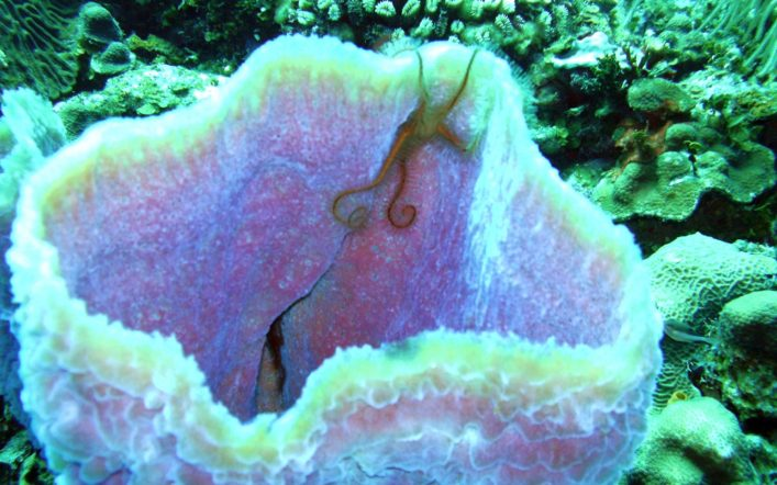 Under The Waves – Marine Life Of The Caribbean