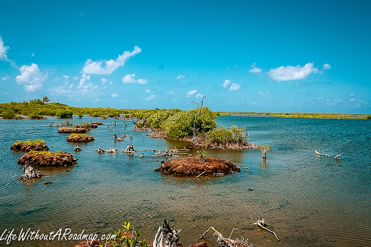 Marshland with alligators and deep blue sky in Cozumel Mexico