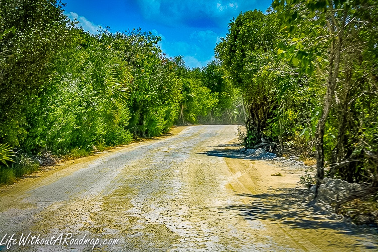 Dirt road with trees on each side and bright blue sky