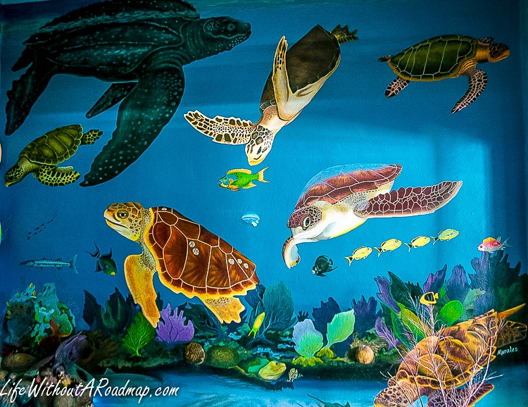 Undersea mural with different types of turtles in Cozumel Mexico museum