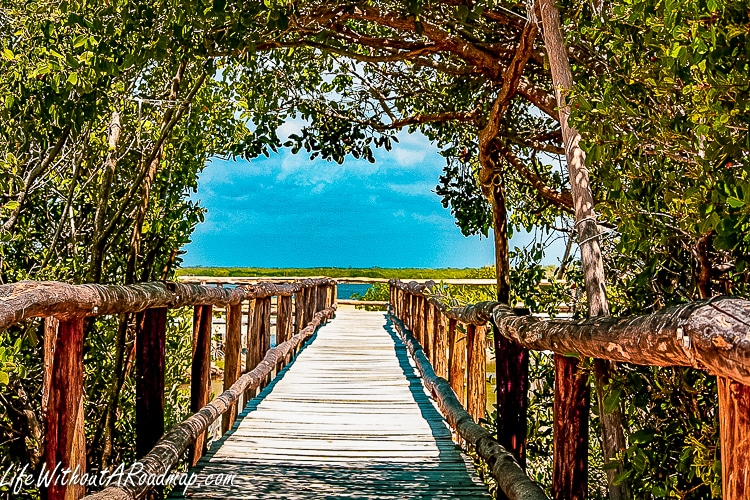 wooden boardwalk with vine entrance leading towards marshland and bright blue sky